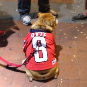 We met Ovie the bulldog from the NHL commercials, while waiting to get into the arena!